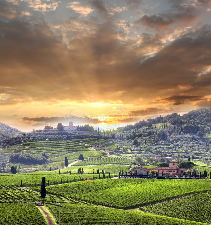 Vineyeard dans Chianti, Toscane, Italie, cordons célèbres photo libre de droits
