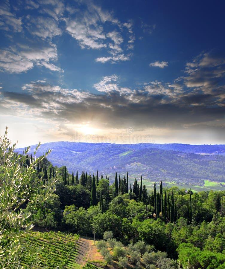 Vineyeard dans Chianti, Toscane, Italie, cordons célèbres photos stock