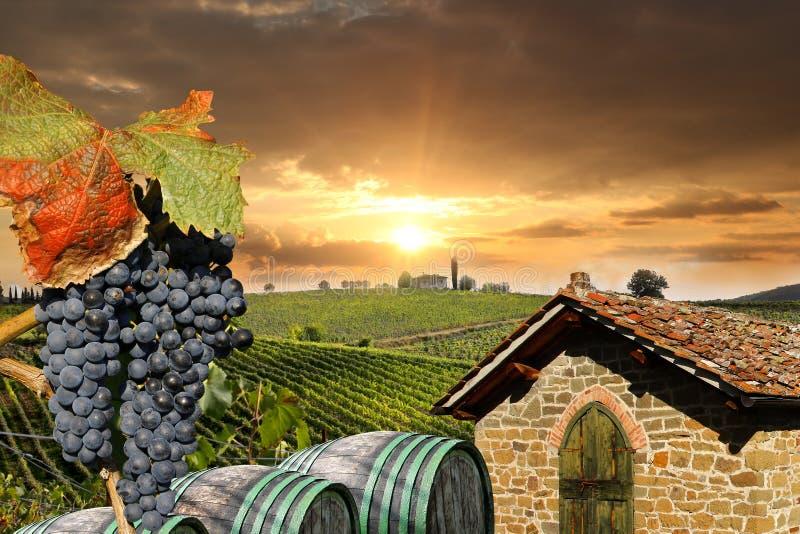 Vineyeard dans Chianti, Toscane, Italie, cordons célèbres images libres de droits
