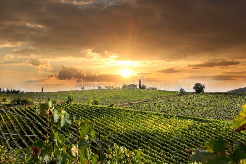 Vineyeard dans Chianti, Toscane, Italie, cordons célèbres photo stock