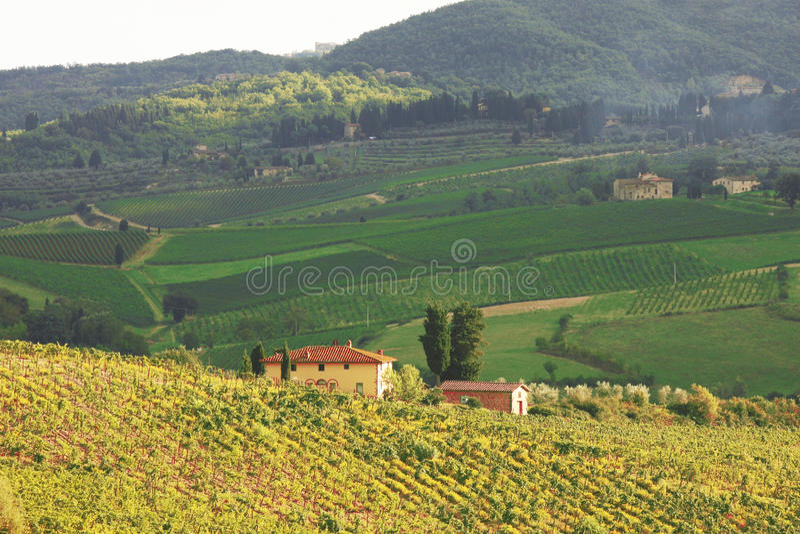 Vineyeard en Chianti, Toscana, Italia, pistas famosas fotografía de archivo