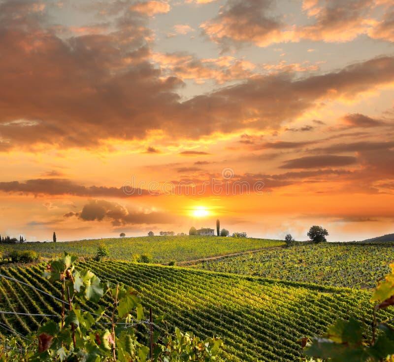 Vineyeard en Chianti, Toscana, Italia, tierras famosas imagen de archivo libre de regalías