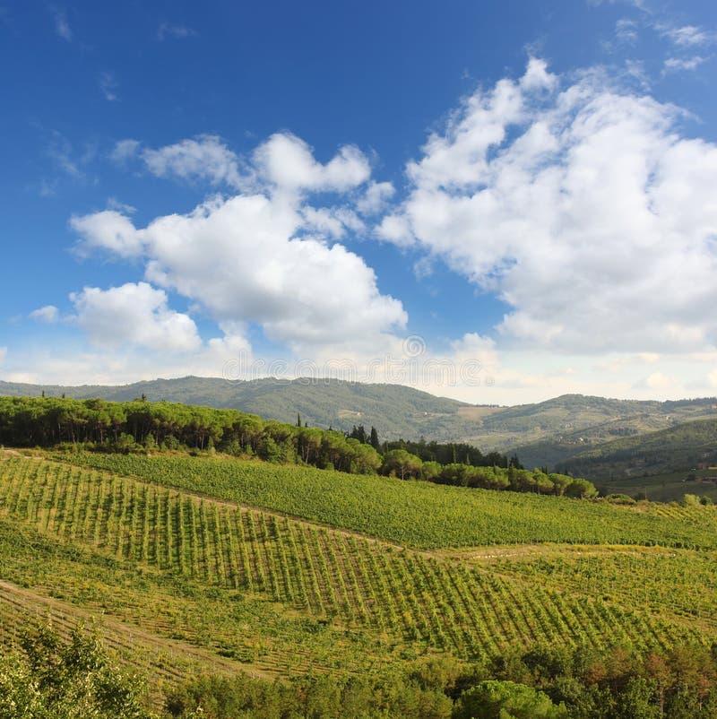 Vineyeard w Chianti, Tuscany, Włochy, sławne ziemie zdjęcia stock