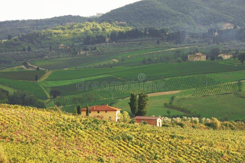 Vineyeard w Chianti, Tuscany, Włochy, sławne ziemie fotografia stock
