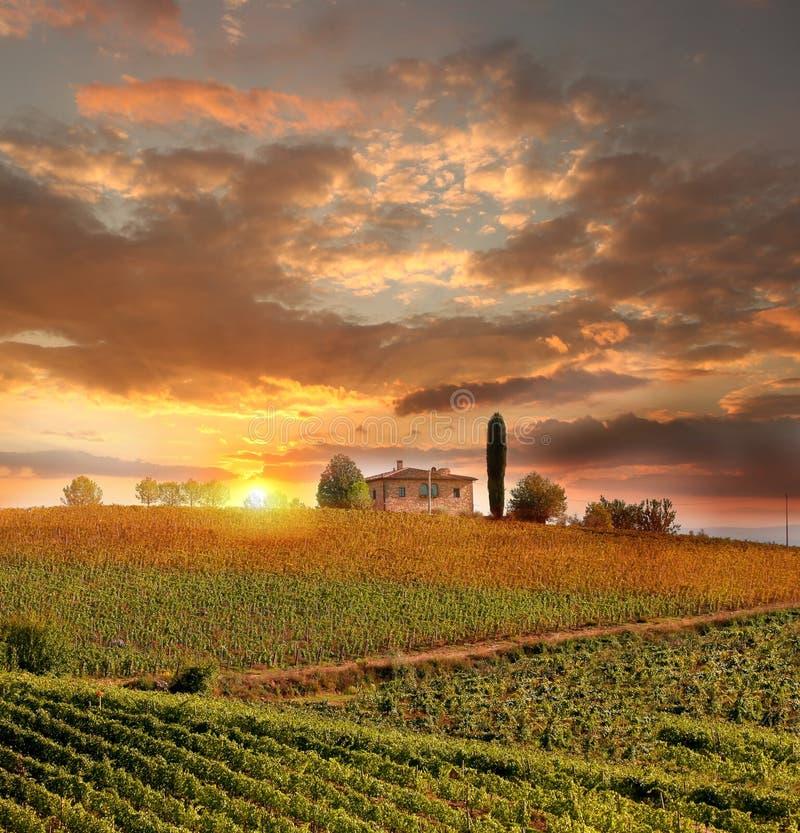 Vineyeard w Chianti, Tuscany, Włochy, sławne ziemie obraz stock