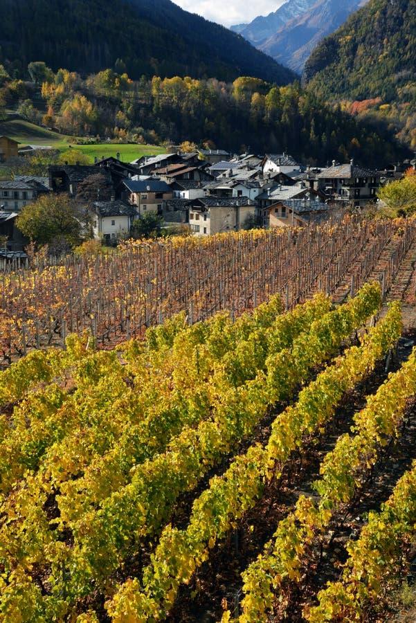 Vingård av den alpina bergbyn av Introd, Aosta, Italien royaltyfri bild