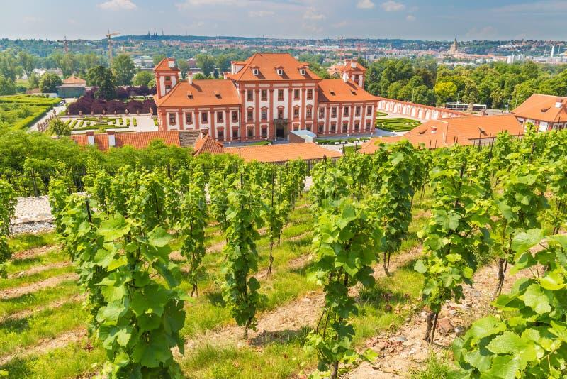 Vingård av stKlaraen nära chateauen Troja, Prague, Tjeckien arkivfoton
