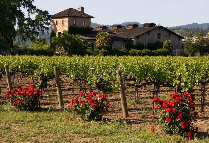 vingård för napasolnedgångdal royaltyfri foto