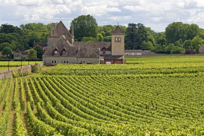 Vingård i Bourgogne, fransk by. arkivfoton