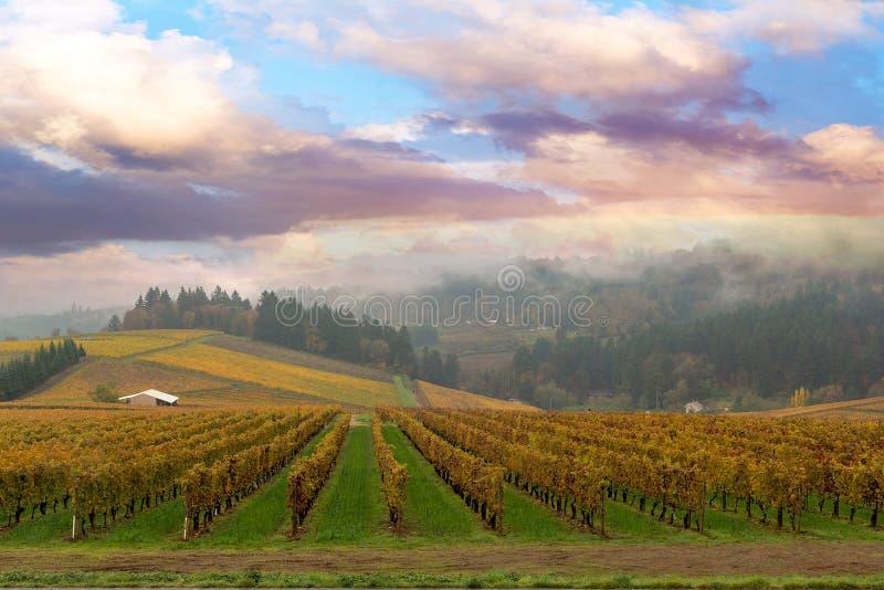 Vingård i Dundee Oregon royaltyfria bilder