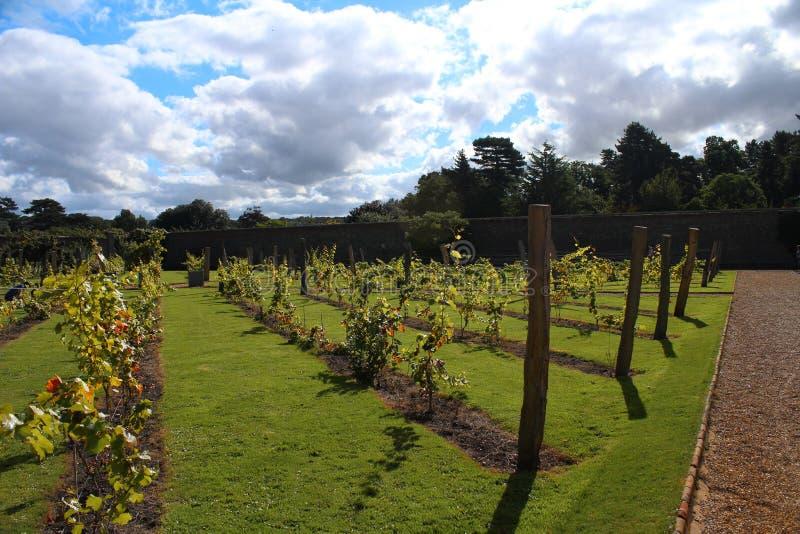 Vingård inom en britt Walled trädgård royaltyfri fotografi