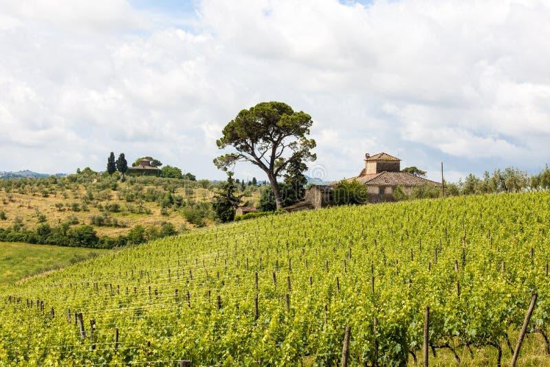 Vingård och lantbrukarhem med cypressar i Tuscany royaltyfria bilder
