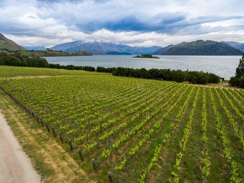 Vingård på sjön Wanaka, Nya Zeeland fotografering för bildbyråer