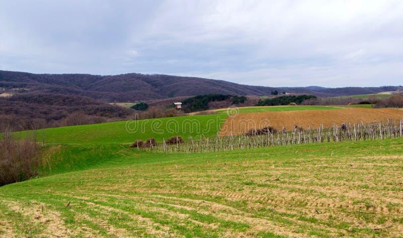Vingård som omges av jordbruks- fält fotografering för bildbyråer