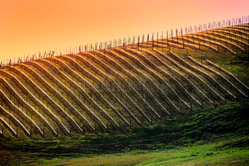 vingård virginia royaltyfria foton