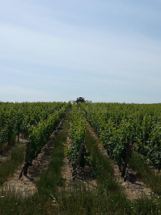 vingårdar royaltyfri foto