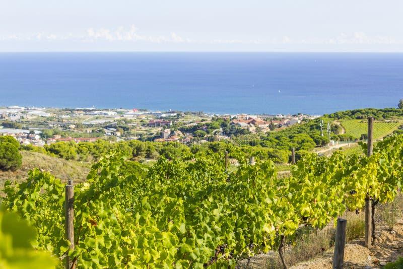 Vingårdar av den Alella vinregionen i Spanien royaltyfria bilder