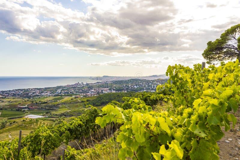 Vingårdar av den Alella vinregionen i Spanien arkivfoton
