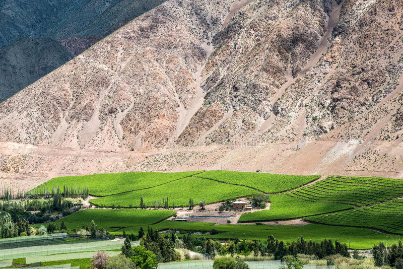Vingårdar av den Elqui dalen, Anderna, Chile arkivbilder
