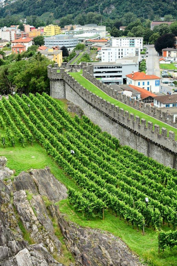 Vingårdar Castelgrande royaltyfria bilder