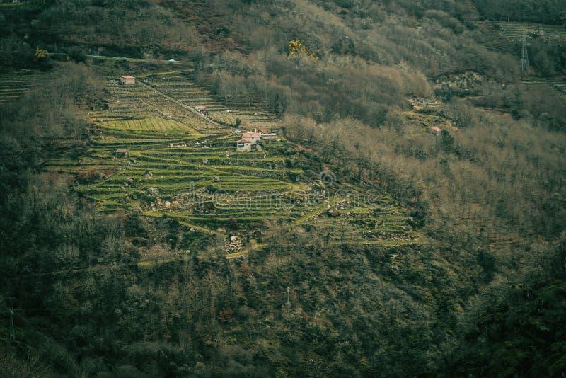 Vingårdar i de Ribeira sacrana arkivfoto