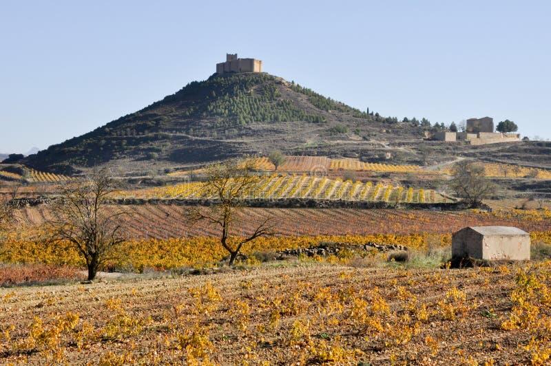 Vingårdar i höst, La Rioja, Spanien royaltyfri bild