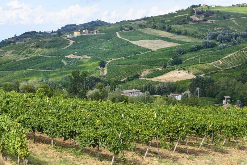 Vingårdar i Oltrepo Pavese (Italien) royaltyfria bilder