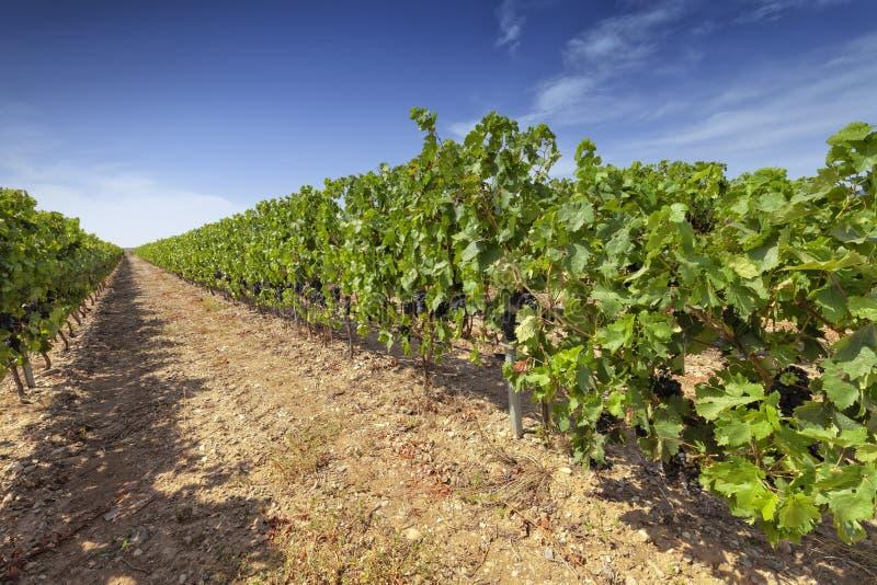 Vingårdar i regionen av La Rioja royaltyfri fotografi