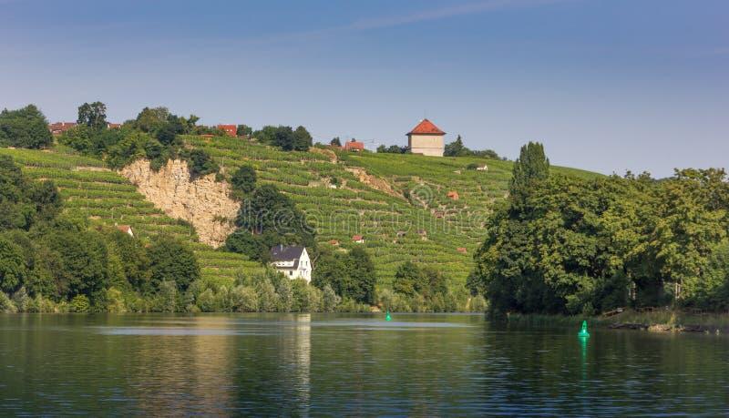Vingårdar längs floden Neckar i Stuttgart royaltyfri fotografi