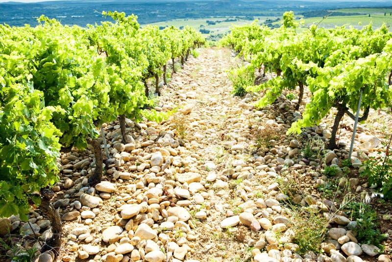 vingårdar nära Chateauneuf-du-Pape, Provence, Frankrike royaltyfria bilder