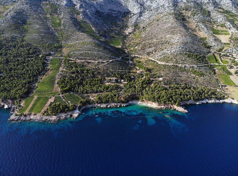 Vingårdar på souths sid av ön Hvar, Kroatien arkivbild