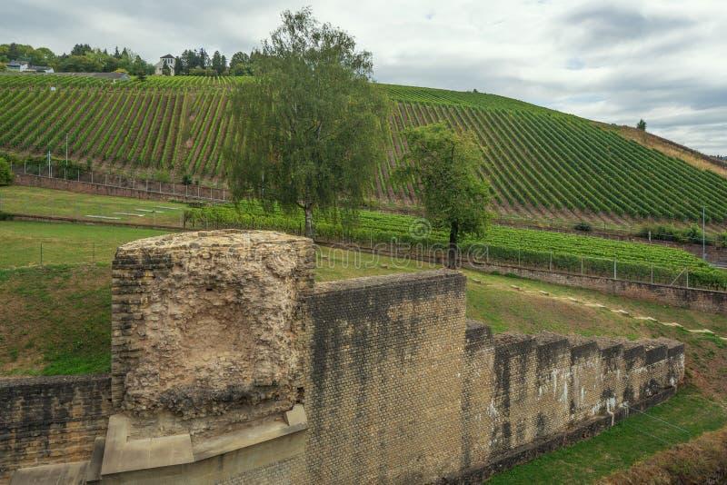 Vingårdar som ses från den roman amfiteatern royaltyfria bilder