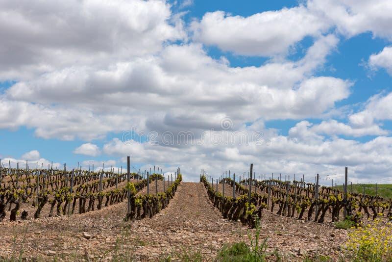 Vingårdlandskap i La Rioja, Spanien arkivfoto