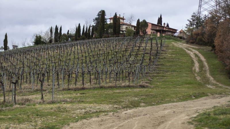 Vingårdlandskap och lantbrukarhem i Tuscany, Italien royaltyfria bilder