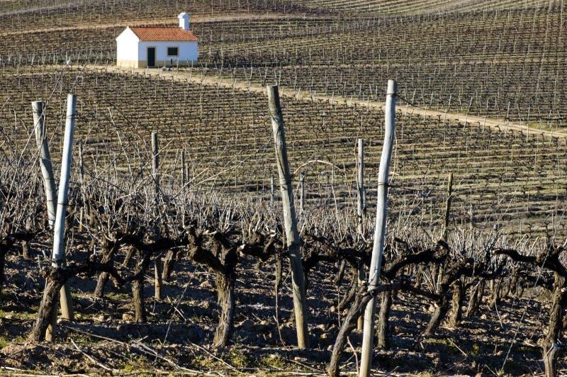 vingårdvinter arkivfoto