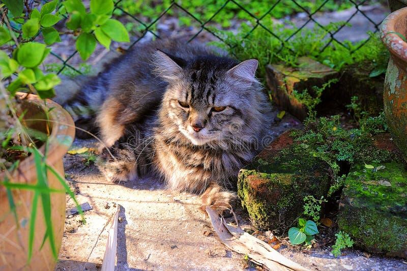 Ving Mijn Cat At The Small Garden rustend onder The Sun stock afbeeldingen