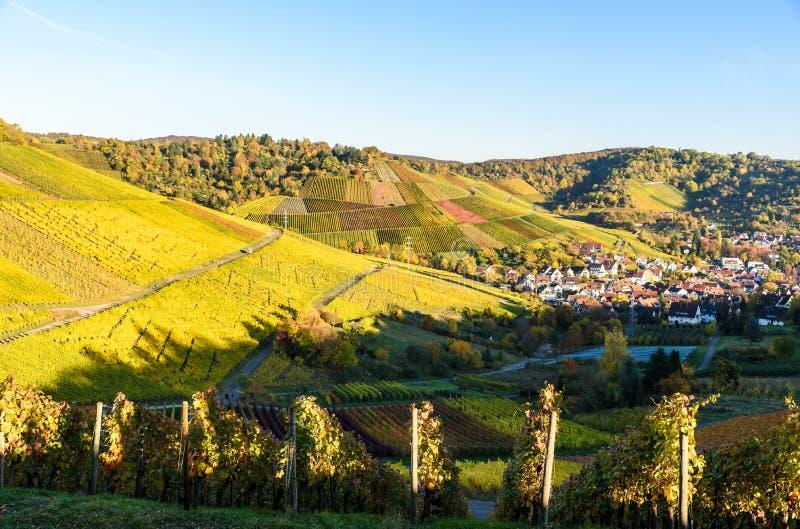 Ving?rdar p? Stuttgart, Uhlbach p? den Neckar dalen - h?rligt landskap i autum i Tyskland fotografering för bildbyråer