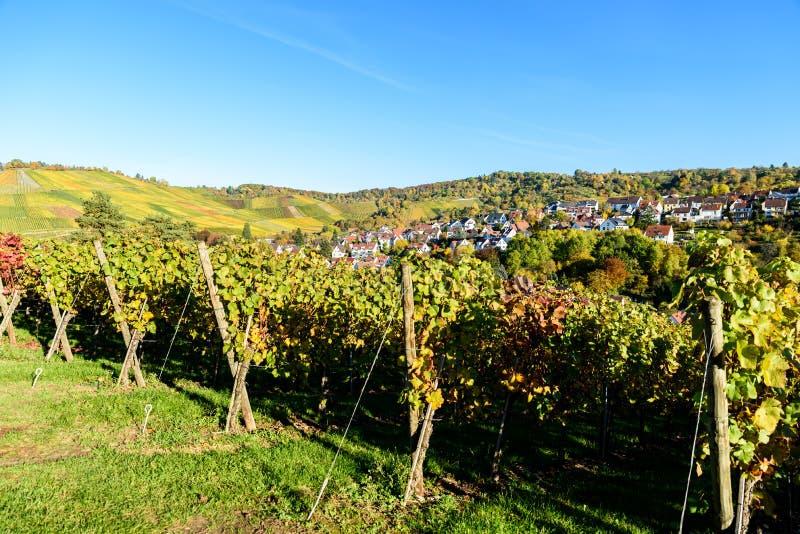 Ving?rdar p? Stuttgart, Uhlbach p? den Neckar dalen - h?rligt landskap i autum i Tyskland royaltyfria bilder