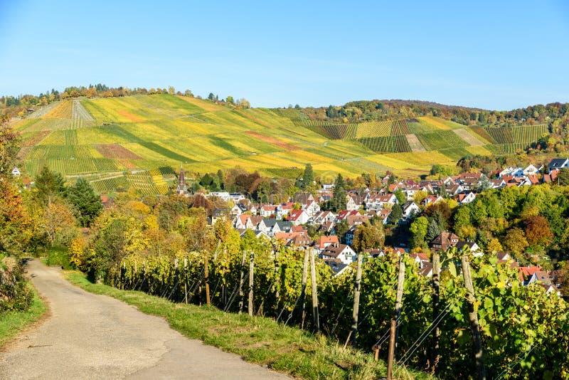 Ving?rdar p? Stuttgart, Uhlbach p? den Neckar dalen - h?rligt landskap i autum i Tyskland arkivbilder