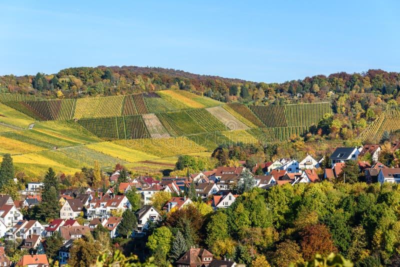 Ving?rdar p? Stuttgart, Uhlbach p? den Neckar dalen - h?rligt landskap i autum i Tyskland royaltyfri fotografi