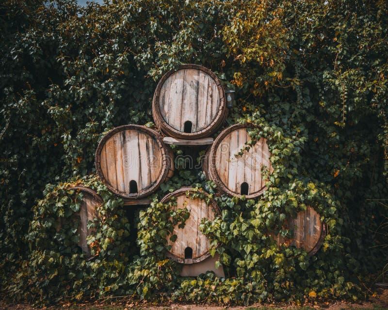 ving?rdar Trummor av vin mellan gården royaltyfri foto
