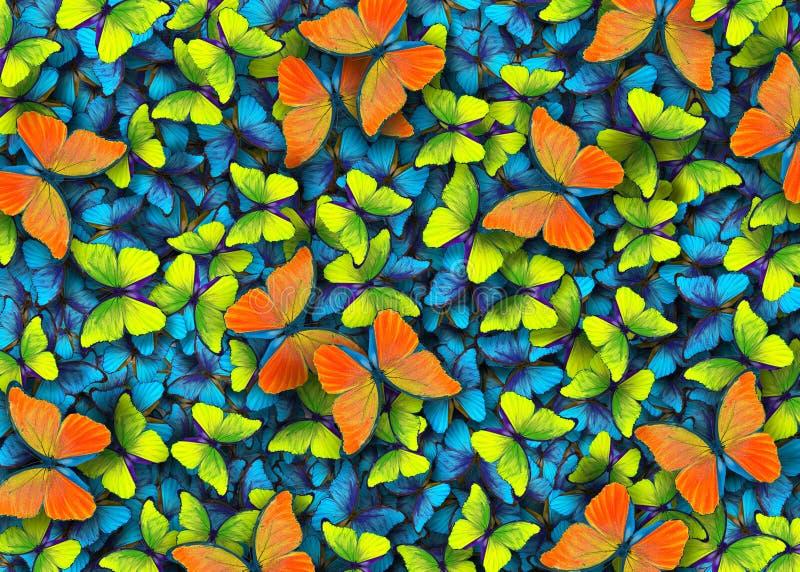 Vingar av en fjäril Morpho Flyget av ljusa blått, apelsinen och gulingfjärilar gör sammandrag bakgrund royaltyfri fotografi