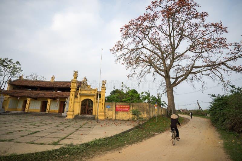 Vinh Phuc, Vietnam - 22. März 2017: Tempel mit blühendem Bombax Ceibabaum und Frau, die auf Bodenstraße in Lap Thach-Bezirk radfä lizenzfreies stockfoto
