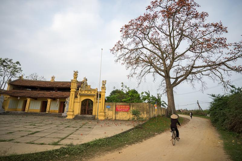 Vinh Phuc, Vietnam - Mar 22, 2017: Temple with blooming bombax ceiba tree and woman cycling on soil road in Lap Thach district. Vi royalty free stock photo