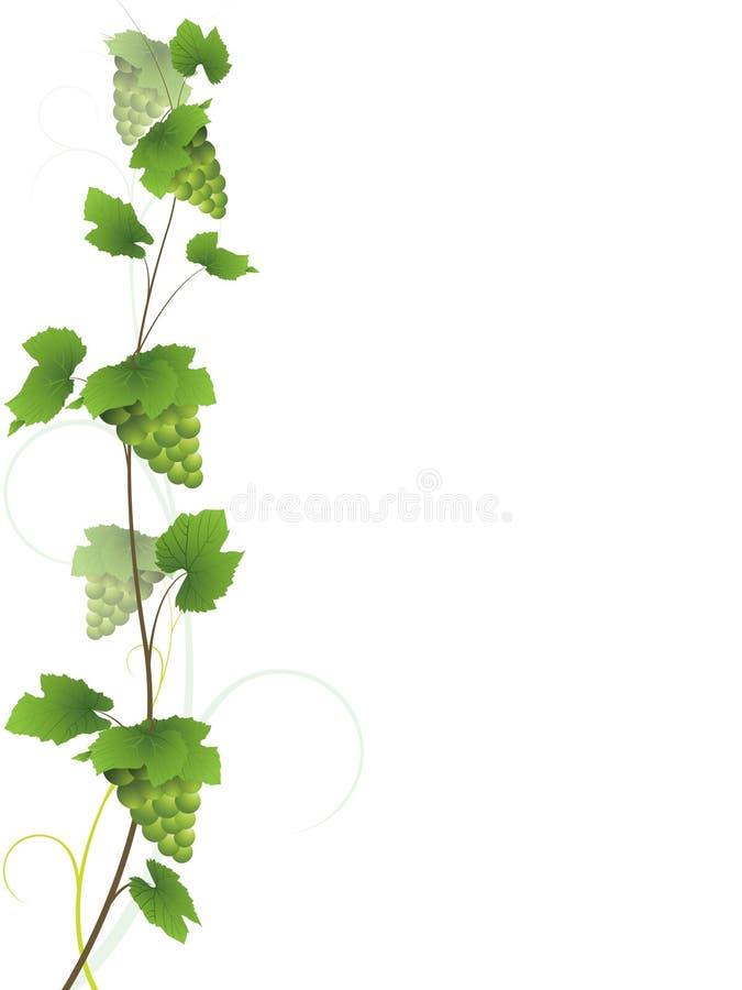 Vinha com uvas verdes ilustração royalty free