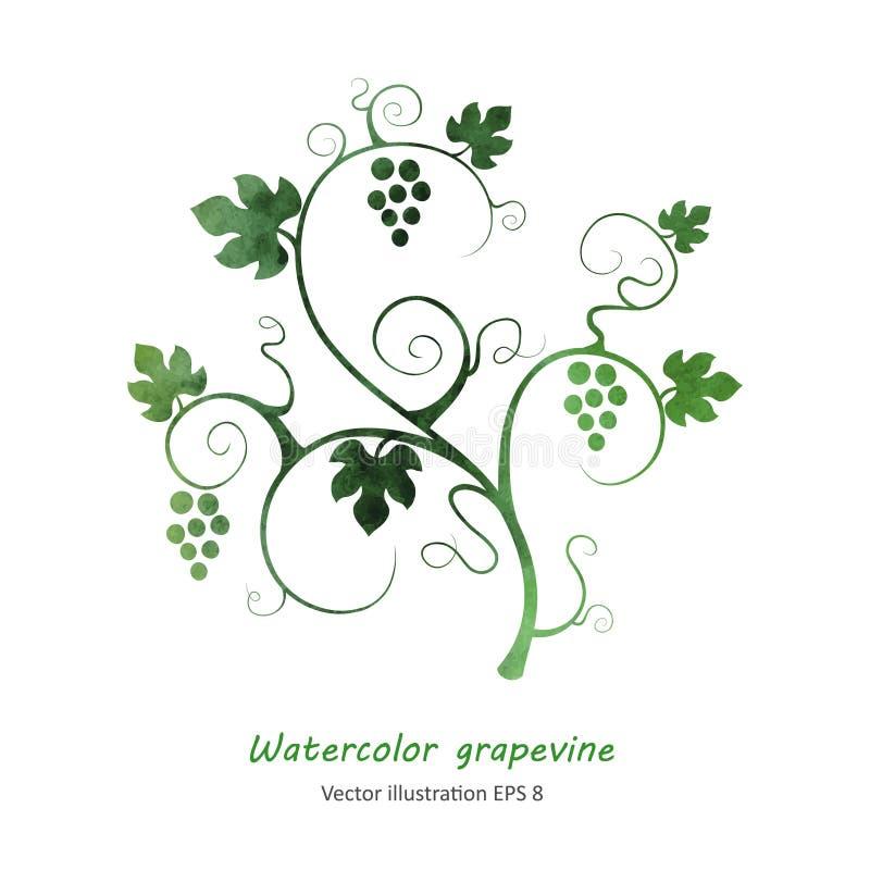 Vinha verde da aquarela ilustração do vetor