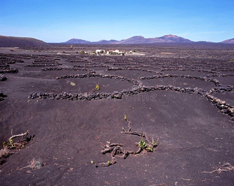 Vinhas, Lanzarote. foto de stock royalty free