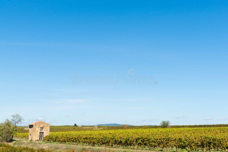 Vinhas na paisagem rural francesa larga foto de stock