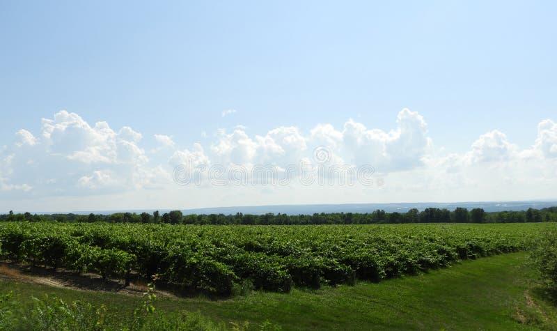 Vinhas sob o céu azul e as nuvens nos lagos finger fotos de stock