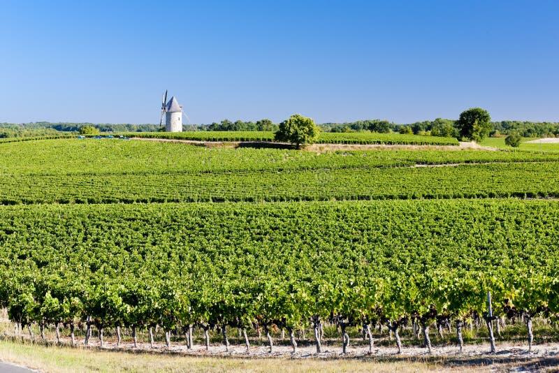 vinhedo com o moinho de vento perto de Blaignan, região do Bordéus, França imagens de stock royalty free